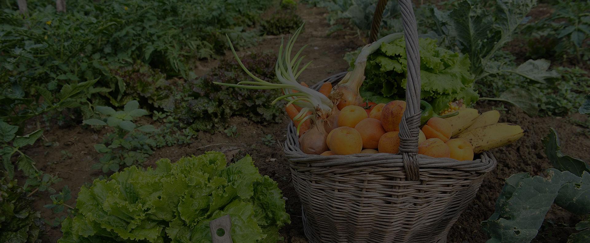Cultivez vos fruits et legumes