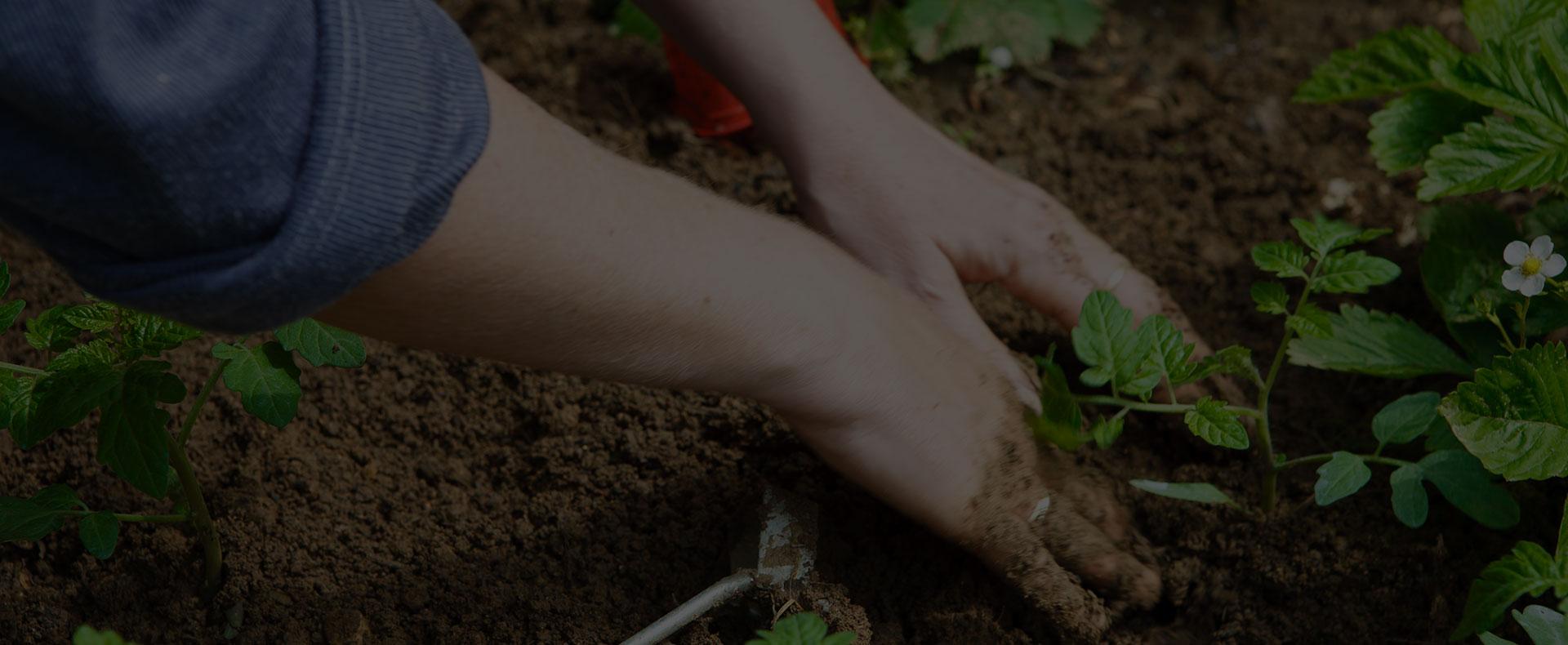 apprendre le jardinage bio